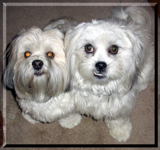 Bosa (right)