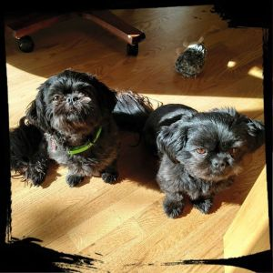 Sammy & Budha, waiting for breakfast ...